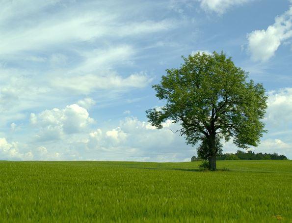 Vakker natur Landbruk